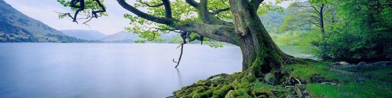 tree by a stream